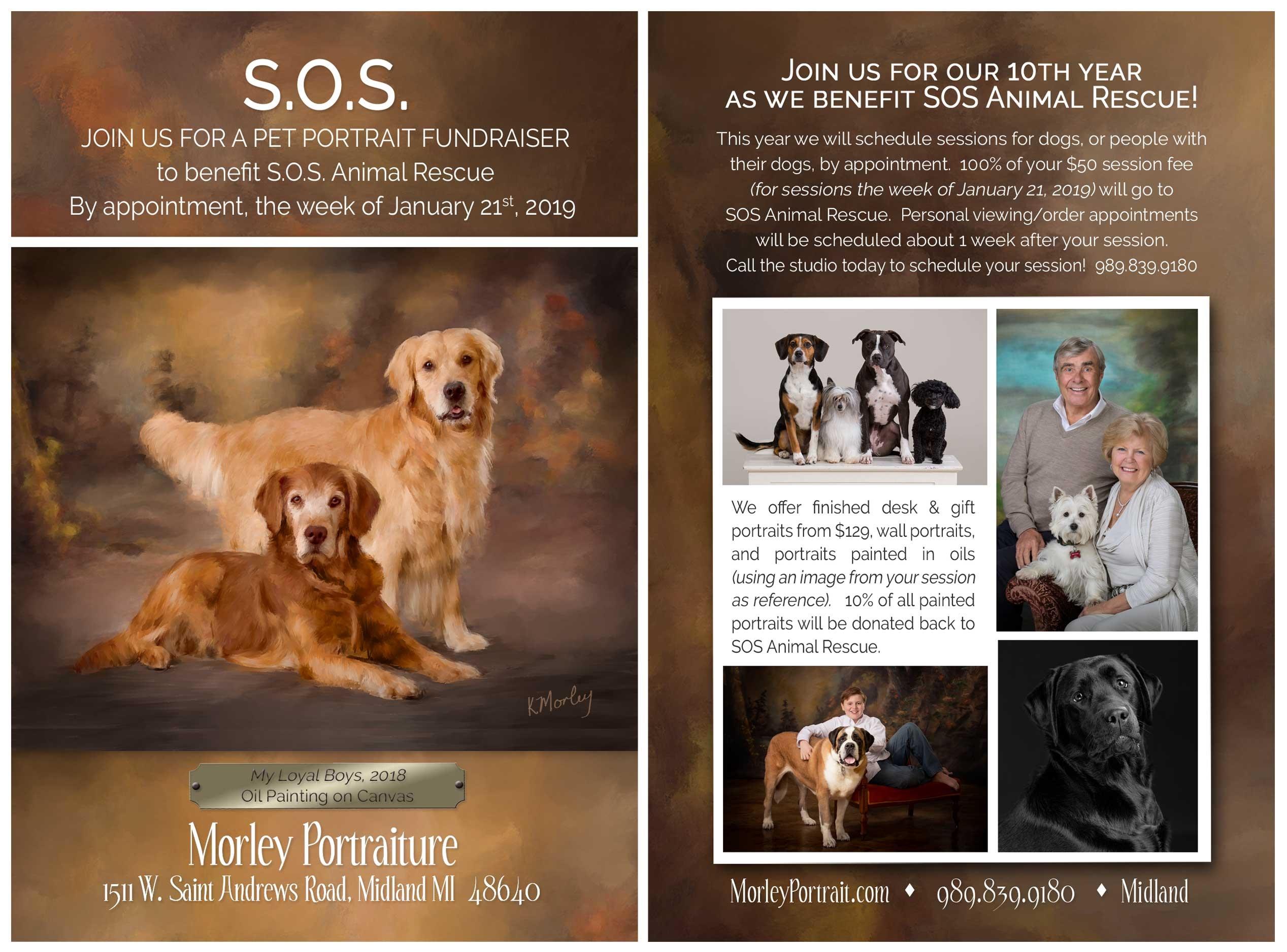 Morley Portraiture « SOS Animal Rescue